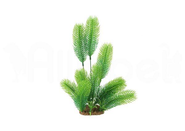 Planta Decorativa para Terrarios