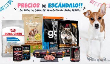 Hemos Bajado los Precios en Alimentación para Perros!, Hasta un 70%, No lo dejes Escapar!