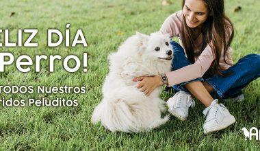 ¡Feliz Día del Perro! De Todo el Equipo de Allinpet